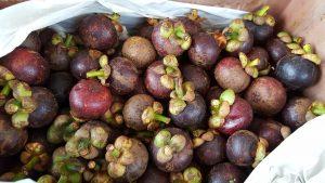 Tudnivalók a mangosztánról és mangosztán ital rendelés