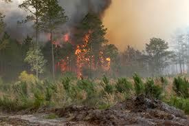 Előzzük meg az erdőtüzet!